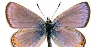 Flutura e Nabokov (foto)